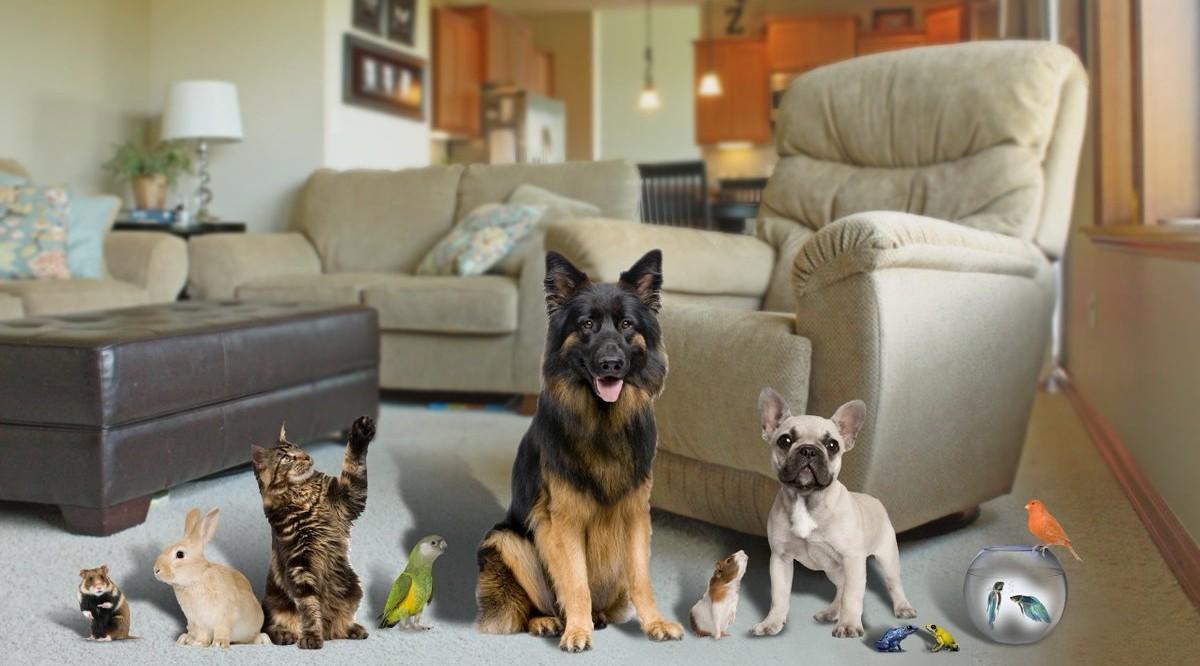 Как снять квартиру, если у вас есть животные